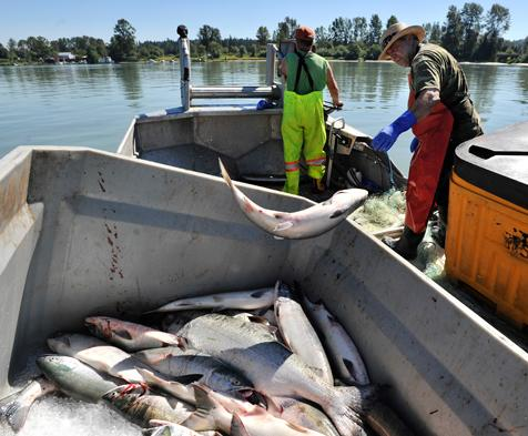 The B.C. Court of Appeal has ruled a Vancouver Island First Nation has the right to conduct commercial fisheries.