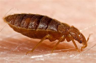 Toronto bed bug reports up 38 per cent - image