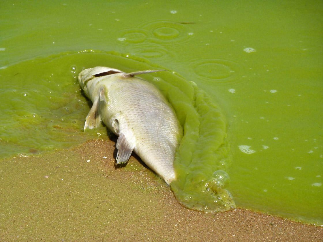 Lake Erie algae bloom of 2011