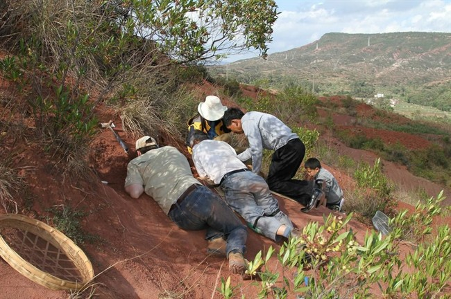 This image released by the University of Toronto shows field crew and volunteers working at the Dawa embryonic bonebed site near the city of Lufeng, in Yunnan, China. An international team of scientists discovered a cache of dinosaur embryos estimated to be 190 million years old, the fossilized bones are among the oldest dinosaur embryos in the world.