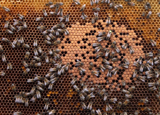 A survey of almost 900 Ontario beekeepers indicated that 70 per cent suffered unsustainable losses.