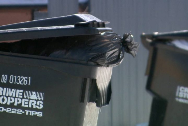 Garbage and recycling bins booted back to the back lanes for collection in Saskatoon.