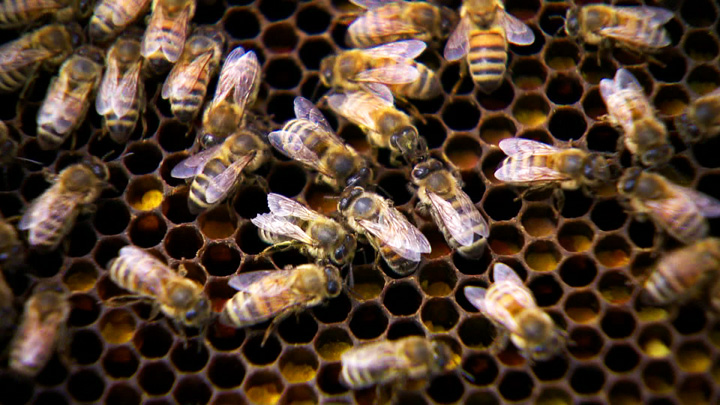 Provincial government proclaims the 4th annual Day of the Honeybee on Wednesday.