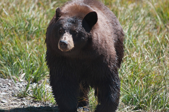 "he Ontario Federation of Anglers and Hunters is urging the public to make sure ""big city animal rights extremists"" don't derail the province's spring bear hunt."