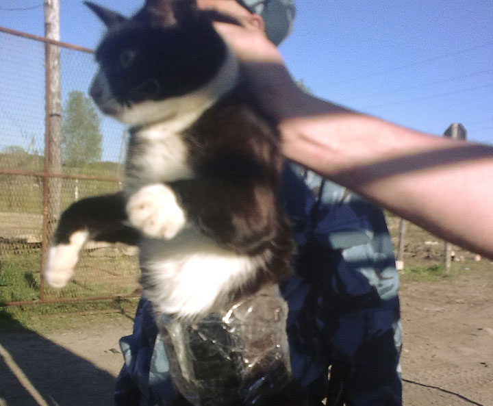 In this handout photo taken on Friday, May 31, 2013 and released by press service of the Russian Federal Penitentiary Service for the Republic of Komi, guards show a cat which they catch on clandestine mission at the Penal Colony No. 1 near the city of Syktyvkar in the Komi province, 1,000 kilometers (some 600 miles) northeast of Moscow, Russia.