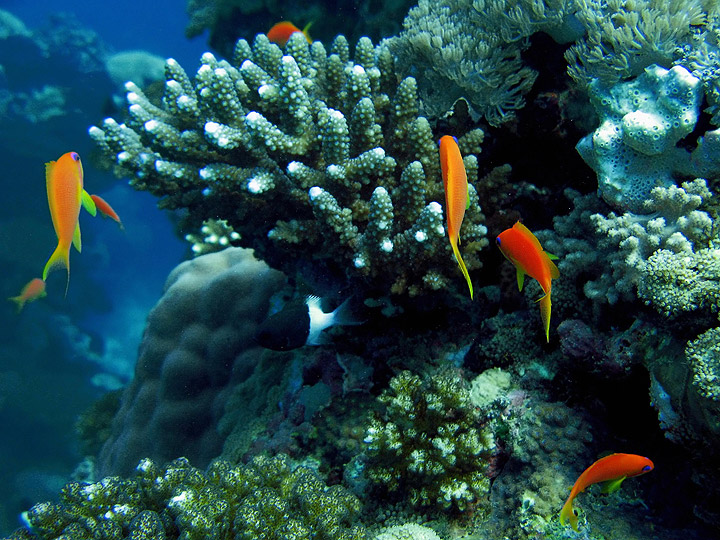 A new study has concluded that fish pee is essential to coral reef health.