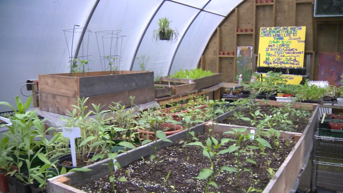 This is the sixth year for the Hope Blooms garden.