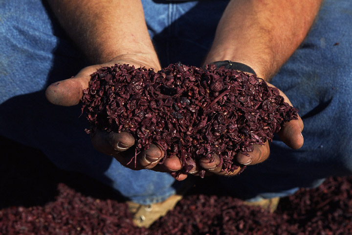 Composting on the rise in Canadian households