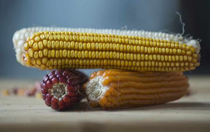 There will be fewer servings of corn in Morden this summer.