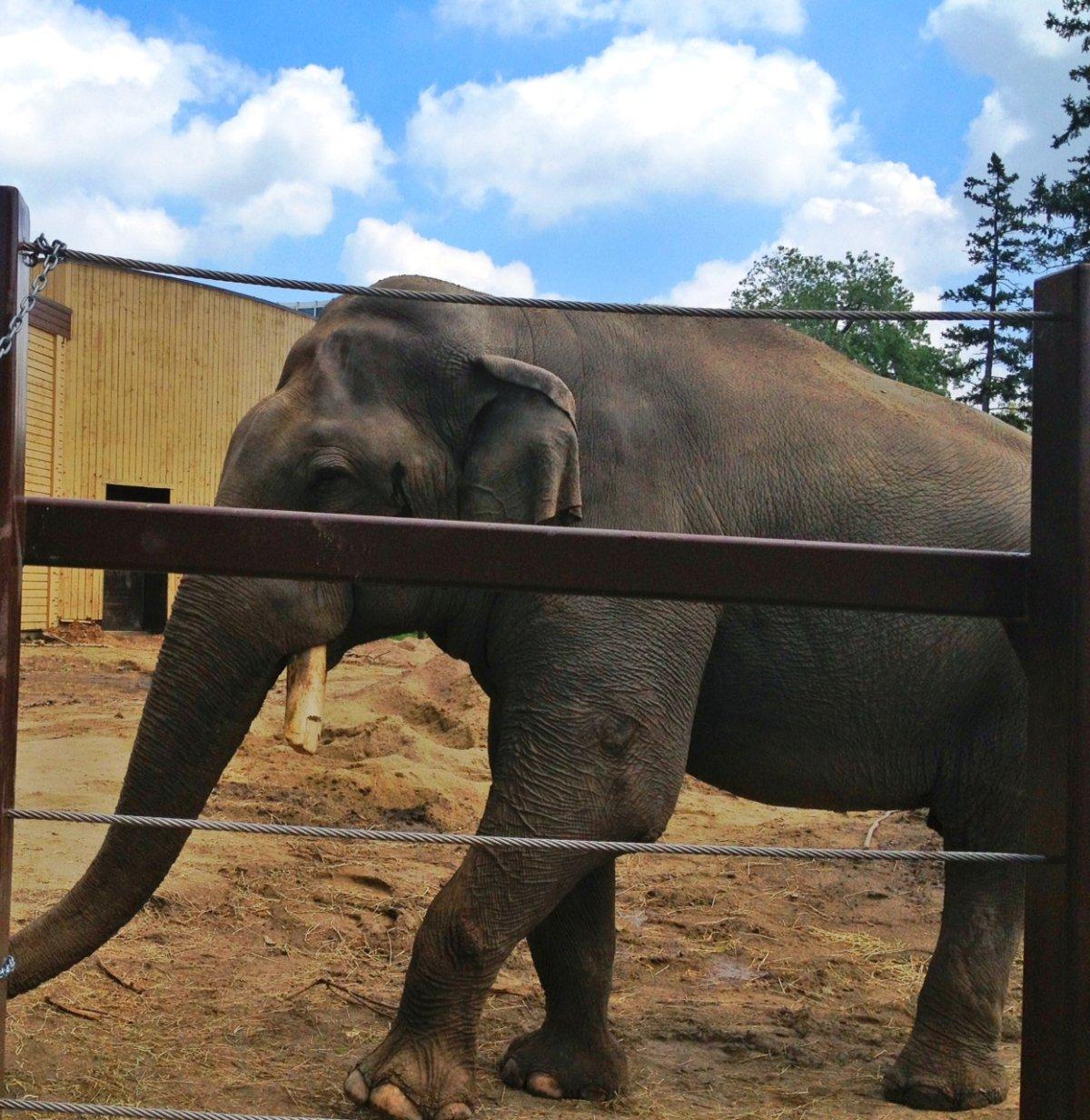 Spike the elephant.