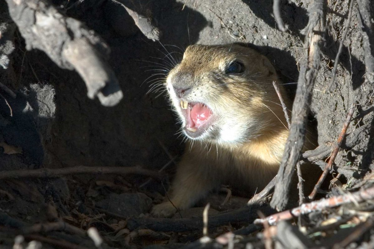 A pest control officer in southeastern Saskatchewan had a run in with RCMP while hunting gophers earlier this week.