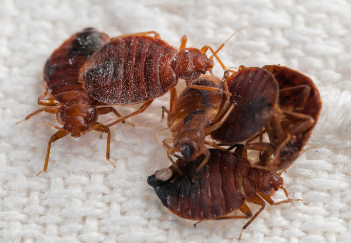 Saskatchewan New Democratic Party urges province to fix bed bug infestation at seniors home.