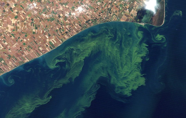 Satellite photo from a NASA website show algae blooms on Lake Erie in this Oct. 5, 2011, file photo.