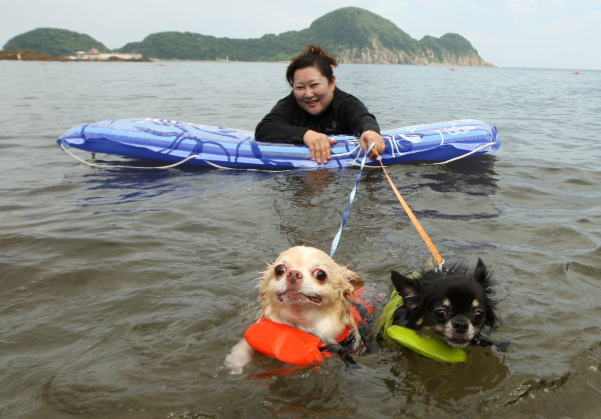 A woman and her two dogs named Yoru (R) and Hinaka bath in the water at Takeno Beach on August 4, 2013 in Toyooka, Japan.