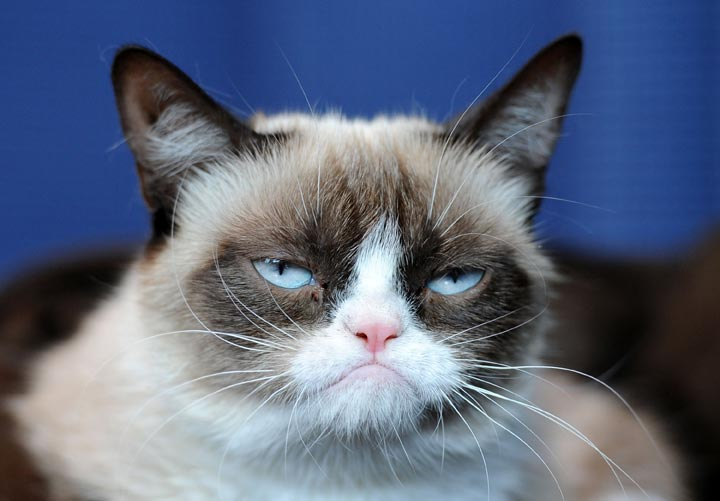 """Grumpy Cat makes an appearance at Kitson Santa Monica to promote her new book """"Grumpy Cat : A Grumpy Book"""" on July 23, 2013 in Santa Monica, California."""