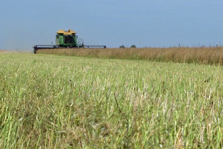 The harvest may have started in Saskatchewan, but is behind the five-year average.