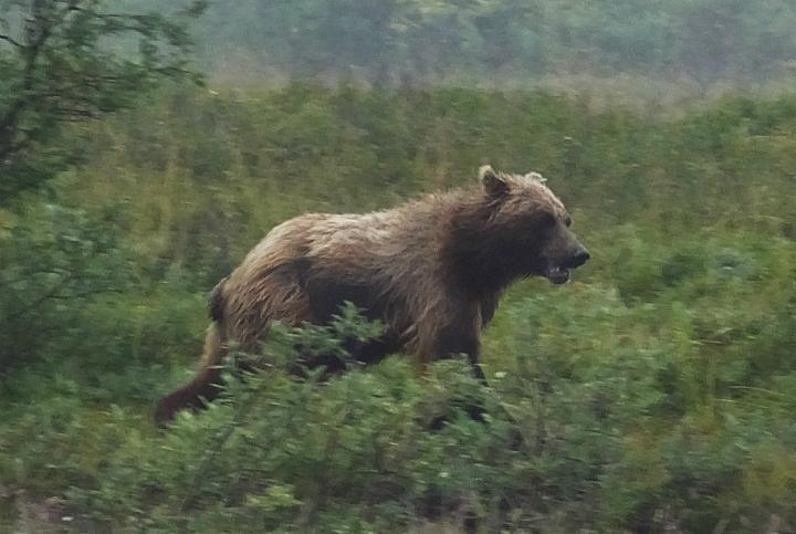 Ontario dismisses Bob Barker's call to scrap plans for spring bear hunt