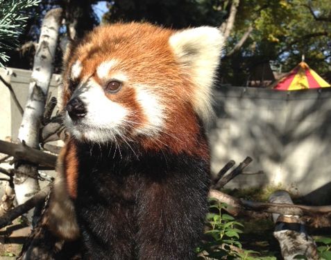Meet Kalden, the Valley Zoo's newest addition. September 27, 2013.