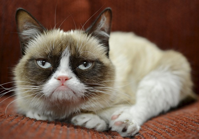 Cheer up Tardar Sauce, you're rich! Grumpy Cat, the frown-faced Internet sensation, has made nearly $100 million for its owner in just two years.