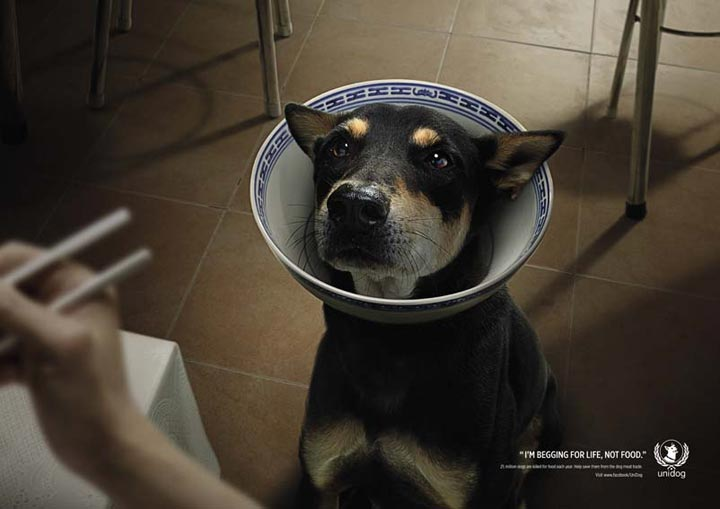 """UniDog, a Thailand-based not-for-profit organization, launched the """"Beg for Life"""" campaign to protest the consumption and trade of dog meat."""