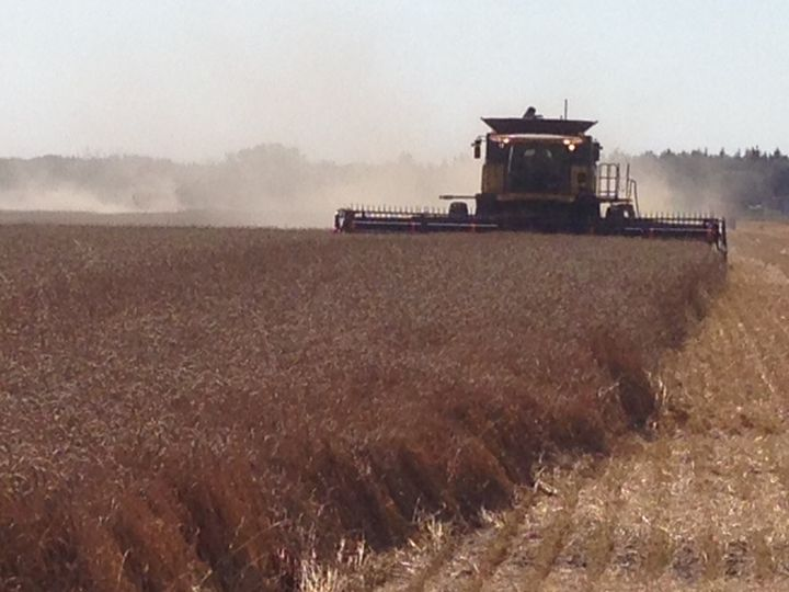 Frost, cool weather and rain delay the 2014 Saskatchewan harvest, pushing it behind the five-year average.