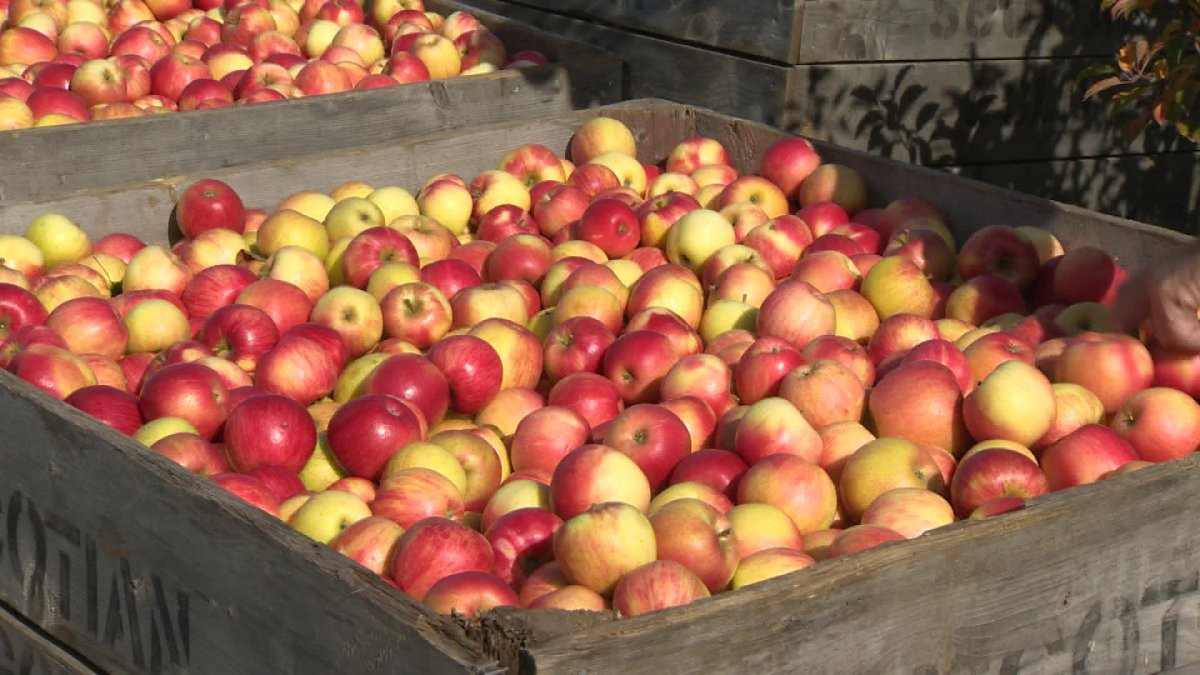 Could the European Union's ban on apple imports containing a potentially harmful chemical hurt Canadian apple exporters?.