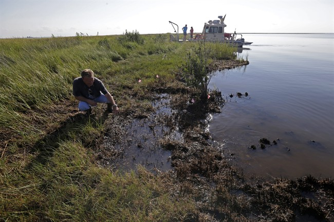 PJ Hahn, Coastal Zone Manager for Plaquemines Parish, examines oil along the shoreline of Bay Jimmy, which was heavily impacted by the Deepwater Horizon oil spill, in Plaquemines Parish, La., Friday, Sept. 27, 2013. The methods that BP employed during its 86-day struggle to stop oil gushing into the Gulf of Mexico will be the focus of a trial resuming Monday, Sept. 30, 2013 in New Orleans, in the high-stakes litigation spawned by the worst offshore spill in the United States.
