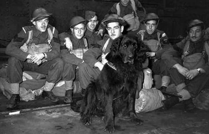 A photo of Gander, a Newfoundland dog whose actions saved the lives of Canadian infantrymen during the Battle of Lye Mun in December 1941.