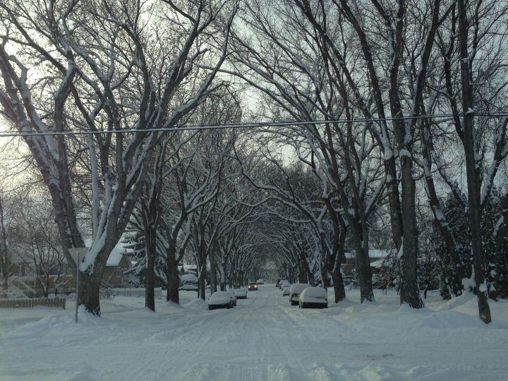 A snowy day in Edmonton's Forest Heights neighbourhood Tuesday, November 19, 2013.