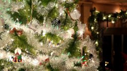 Continue reading: Scott Thompson: Why is my dog eating light bulbs off the Christmas tree — and why now?