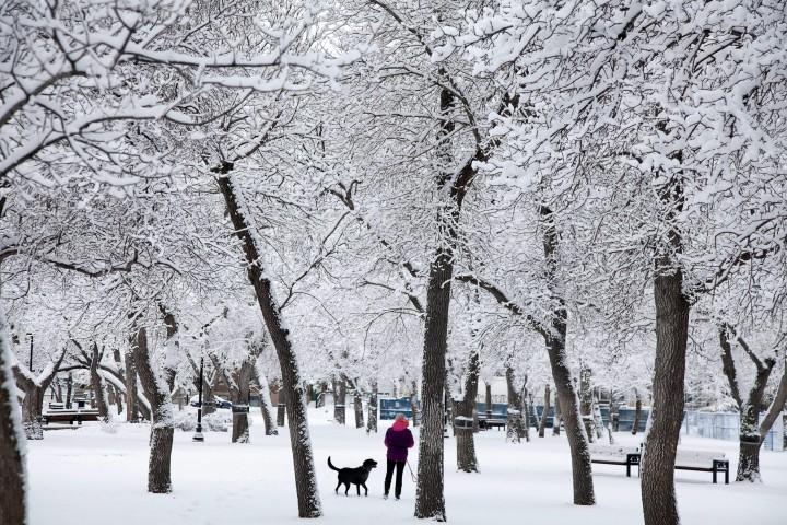Wascana Park after a snowfall.