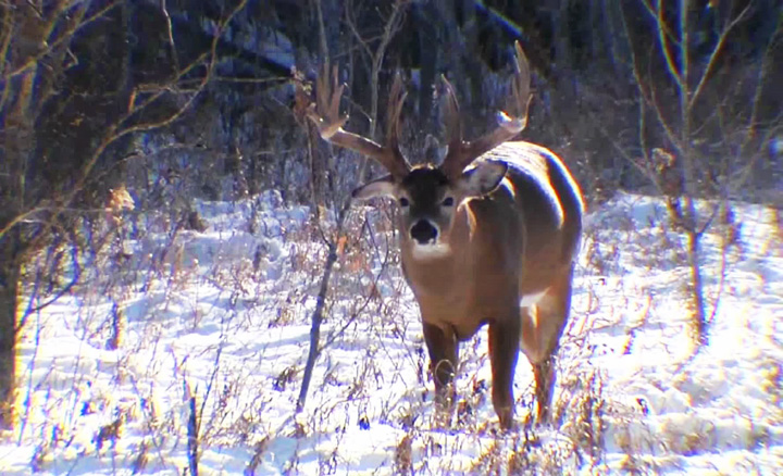 A man was arrested for illegally hunting deer at night in Northumberland County.