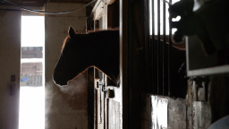Continue reading: Feds to fund 2 new studies on equine therapy for veterans