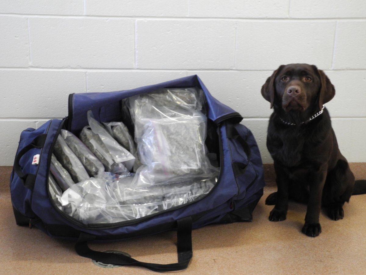 Maggie, an RCMP drug-sniffing dog, sits beside a bag of seized marijuana.