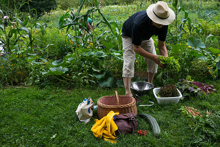 Tips for homeowners inheriting a garden with their new home - image