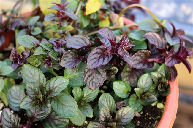 These plants are the next best thing to chocolate