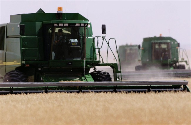 Combine harvesters work a wheat field south of Lethbridge, Alta., on Aug. 13, 2001.