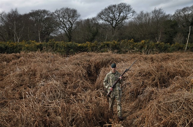 British army Rifleman Stuart Gray walks on a WW1 practise trench as he poses for the photographers in Gosport, southern England, Thursday, March 6, 2014. This overgrown and oddly corrugated patch of heathland on England's south coast was once a practice battlefield, complete with trenches, weapons and barbed wire. Thousands of troops trained here to take on the Germany army.  (AP Photo/Lefteris Pitarakis).