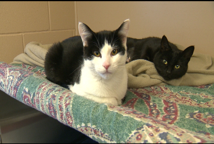 Winnipeg Humane Society is need of wet food for both cats and dogs.