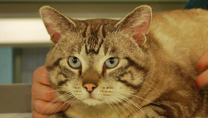Simba was looking for a new home in Adpot a Pet.