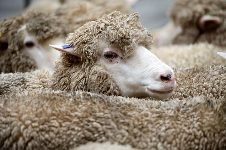 RCMP charge Saskatchewan man after 800 farm animals were seized in southern Saskatchewan.
