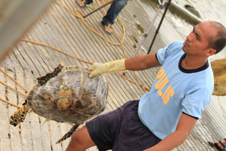 A Philippine National Police Maritime Group officer holds a dead green sea turtle as he unloads them from a Chinese vessel on May 10, 2014.