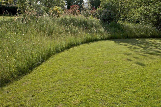 Natural lawn lessens need for mowing trimming