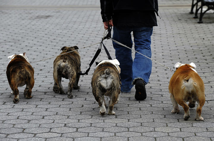 Dog walkers safety tips