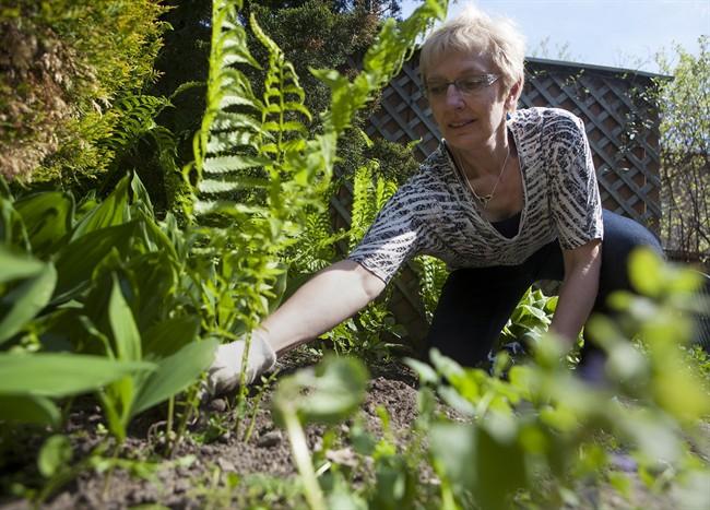 Avoid overdoing garden work to prevent sore back