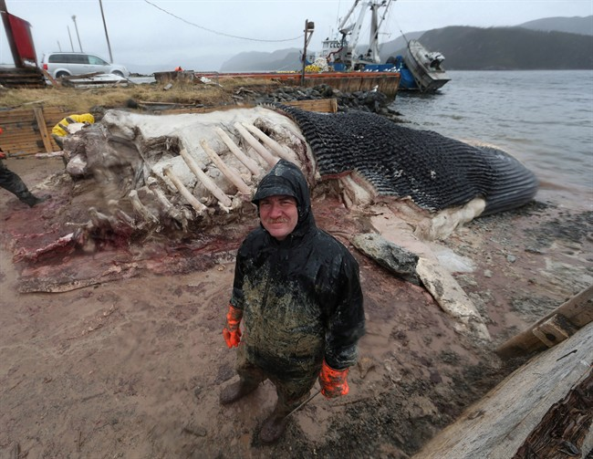 Mark Engstrom, Senior Curator and Deputy Director of Collections and Research at the Royal Ontario Museum, in front of the carcass of a blue whale in Winter House Brook, N.L.