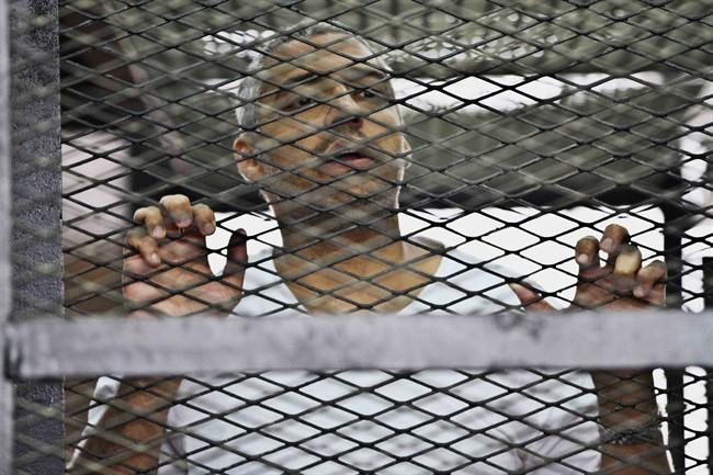 FILE - In this Thursday, May 5, 2014 file photo, Mohammed Fahmy, Canadian-Egyptian acting bureau chief of Al-Jazeera, appears in a defendant's cage along with several other defendants during their trial on terror charges at a courtroom in Cairo, Egypt.