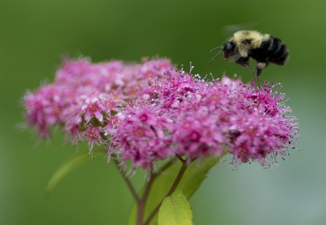 Garden centre flowers test positive for 'bee-killing' pesticide, study says