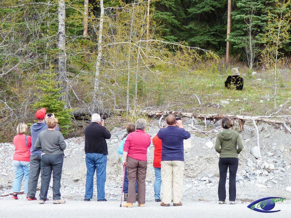 Tourists take photos of a bear. Courtesy of Cynthia Berry.