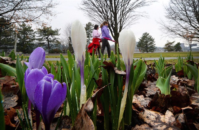 Spring arrives early in London, temperature could hit 17 C Wednesday - image